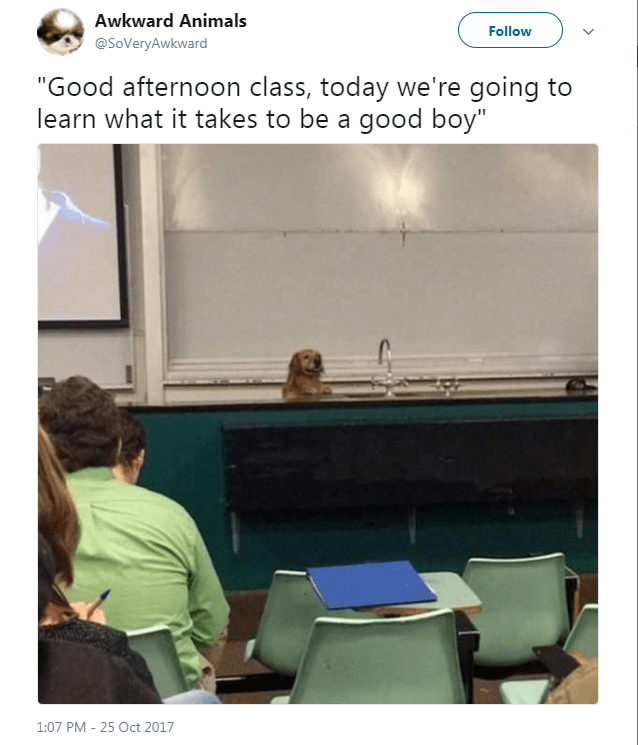 "dog tweet - Text - Awkward Animals Follow @SoVeryAwkward ""Good afternoon class, today we're going to learn what it takes to be a good boy"" 1:07 PM 25 Oct 2017"