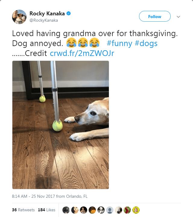 dog tweet - Nose - Rocky Kanaka Follow @RockyKanaka Loved having grandma over for thanksgiving. Dog annoyed. #funny #dogs .....redit crwd.fr/2mZWOJr 8:14 AM 25 Nov 2017 from Orlando, FL 36 Retweets 184 Likes