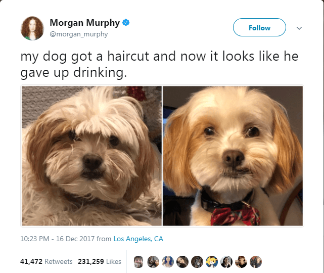 dog tweet - Dog - Morgan Murphy @morgan_murphy Follow my dog got a haircut and now it looks like he gave up drinking. 10:23 PM - 16 Dec 2017 from Los Angeles, CA 41,472 Retweets 231,259 Likes