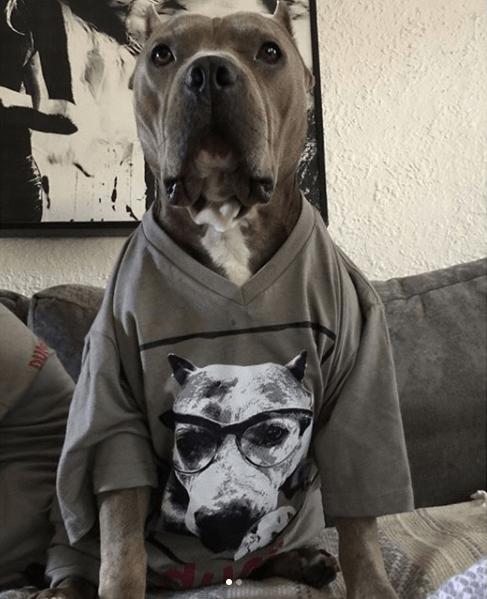 Dog - A