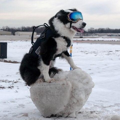 Dog - NRALGIV www.AidPERTK.ORG