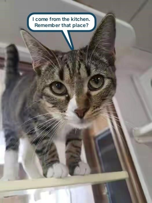 Its Not The Same Without You Lolcats Lol Cat Memes Funny