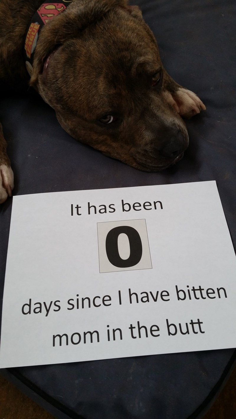Dog - It has been days since I have bitten mom in the butt
