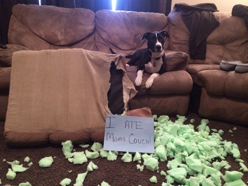 Canidae - ATE Moms CouCH!