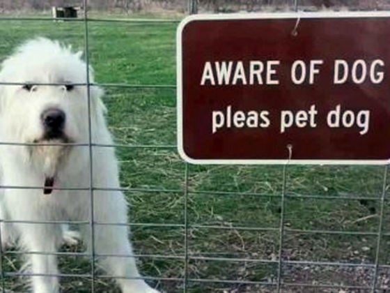 Dog - AWARE OF DOG pleas pet dog