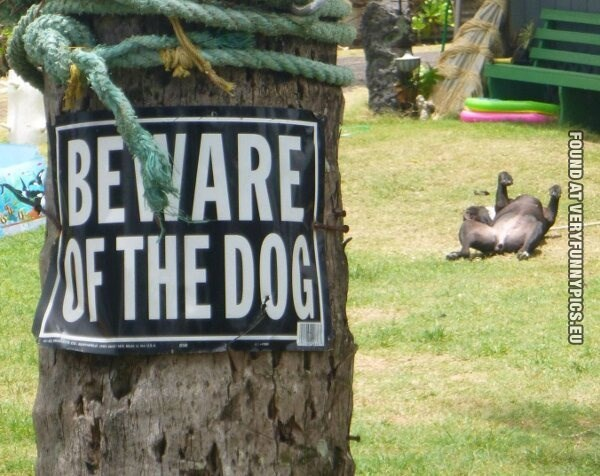 Grass - BEWARE 7OF THE DOG FOUND AT VERYFUNNYPICS.EU