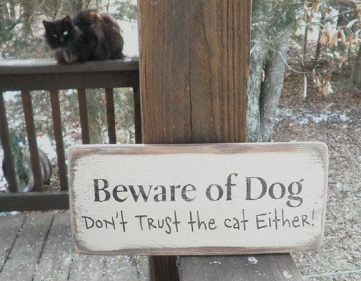 Signage - Beware of Dog Dor't TRust the cat Either!