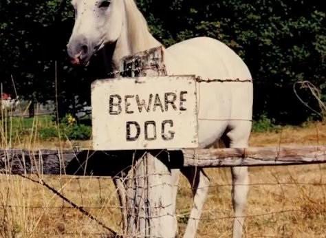 Horse - BEWARE DOG