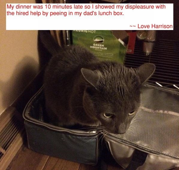 Cat - My dinner was 10 minutes late so I showed my displeasure with the hired help by peeing in my dad's lunch box. Love Harrison RICHOT GREEN HOUNTAIN
