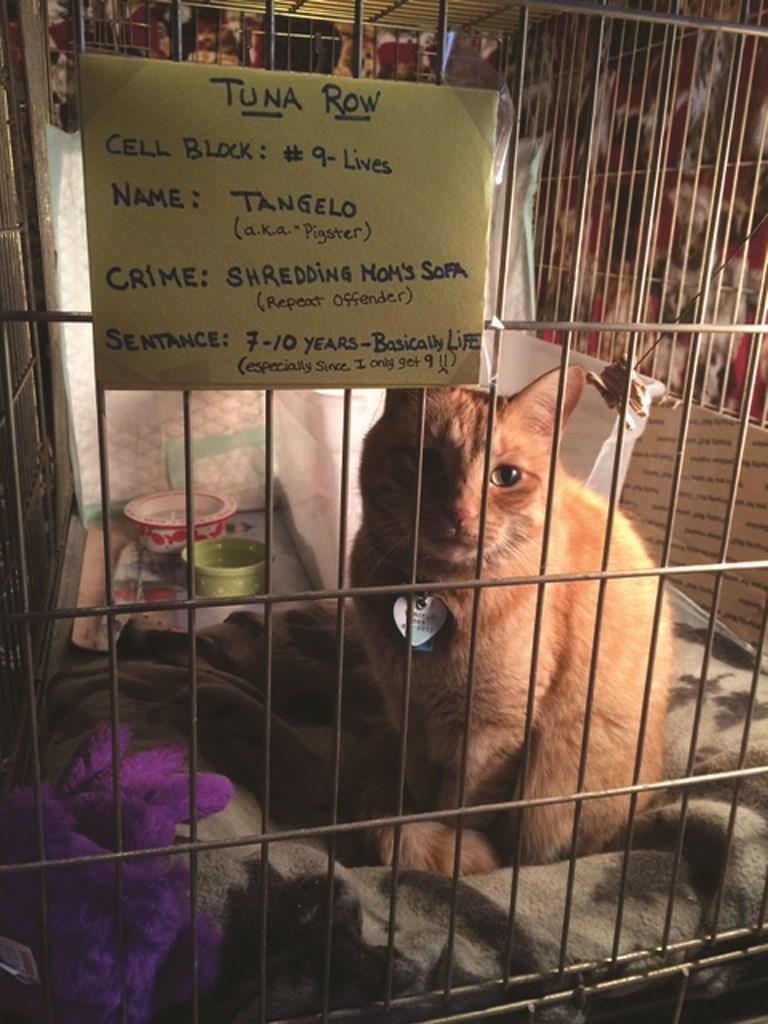 Animal shelter - TUNA RoW CELL BLOCK: #9-Lives NAME TANGELO (aka Pigstrer) CRIME: SHREDDING NOM'S SOFA (Repeat 0sfender) SENTANCE: 7-/0 YEARS-Basicaly Life (especially Since 1 ony get 9 )