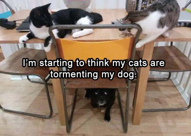 caturday meme about cats bullying a dog