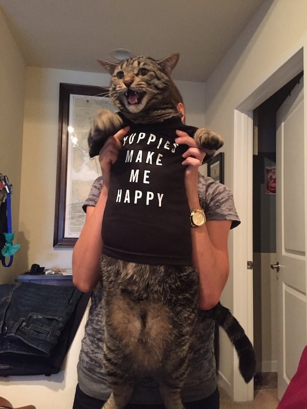 caturday meme about yuppies with pic of a cat dressed in a shirt