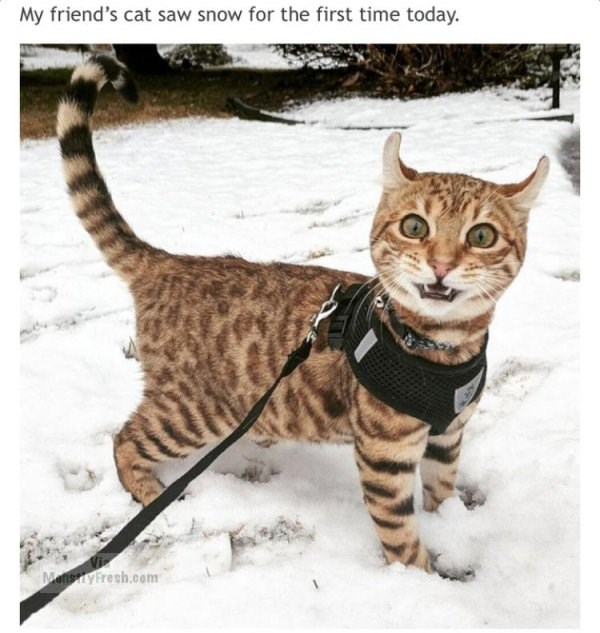 caturday meme with a cat seeing snow for the first time