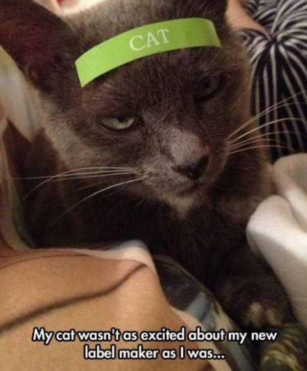 """caturday meme about label making with pic of an annoyed cat wearing a """"cat"""" sticker"""