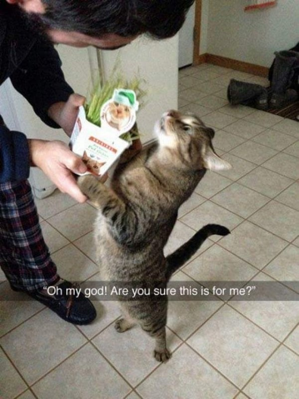 caturday meme with snapchat of a cat receiving a catnip plant