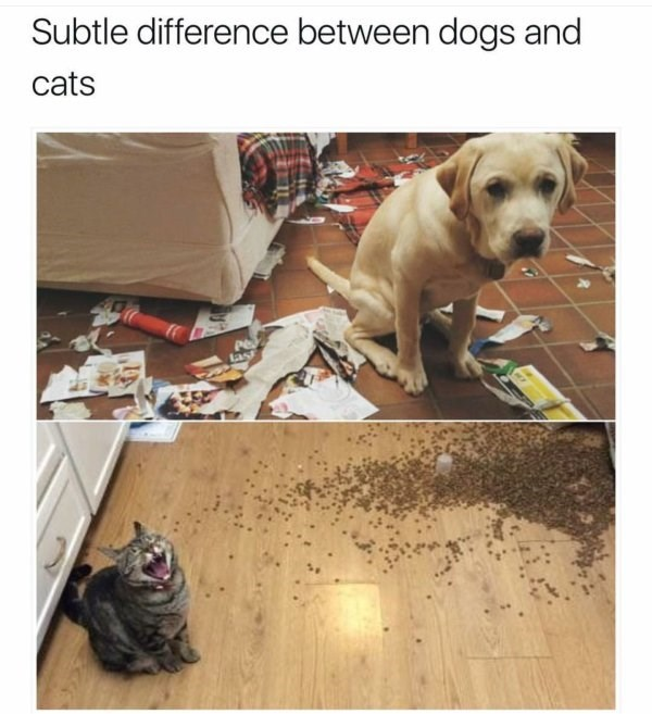 caturday meme about dogs being ashamed of the messes they make while cats are proud of it