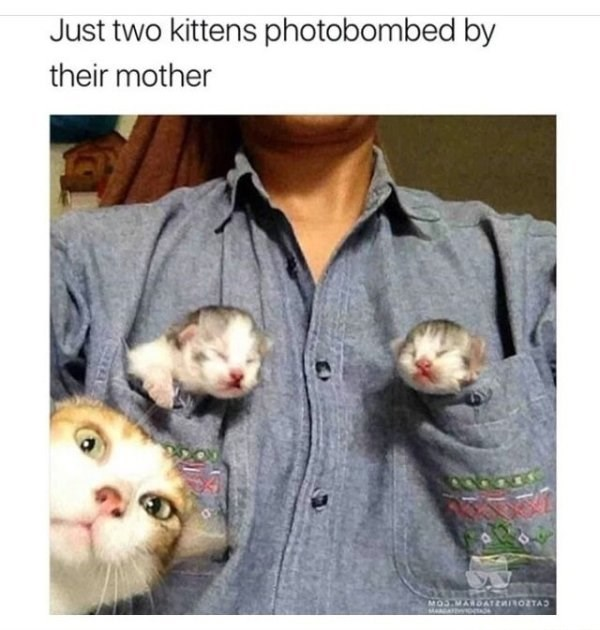 caturday meme with pic of kittens in a shirt's pockets