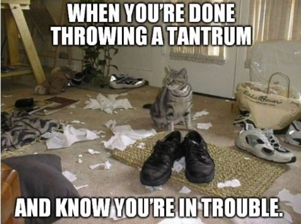 caturday meme about realizing you're about to be in trouble with pic of cat in the middle of a messy room