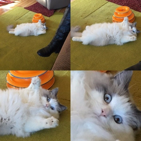 caturday meme with funny pics of a fat cat laying on its back
