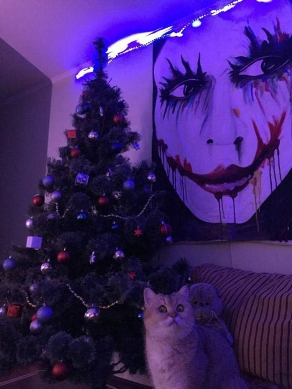 caturday meme with pic of a cat making a cautious face in front of a Christmas tree