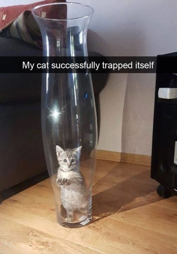 caturday meme with snapchat of kitten trapped inside a tall glass vase