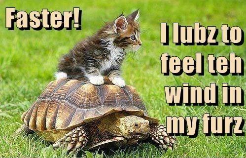 Tortoise - Faster! Dlubzto feel teh wind in my furz