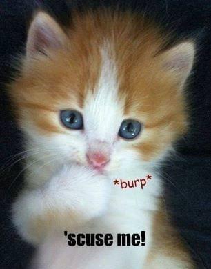 Cat - burp* 'scuse me!