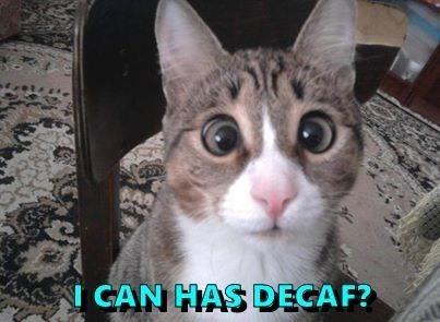 Cat - GAN HAS DECAF?