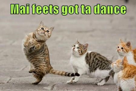 Cat - Mai feets got ta dance