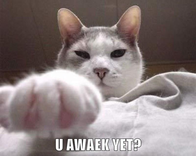 Cat - U AWAEK VET?