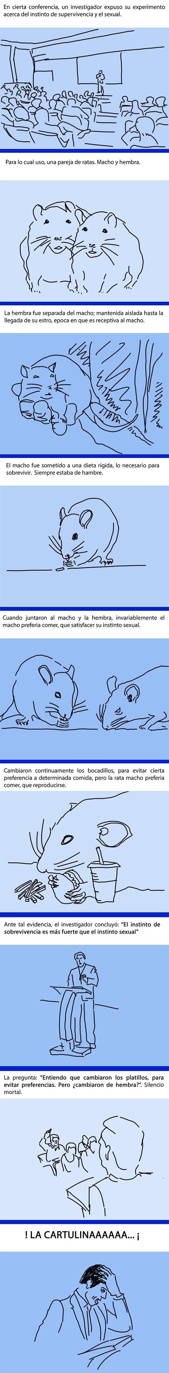 experimento cientifico de la rata macho y la rata hembra