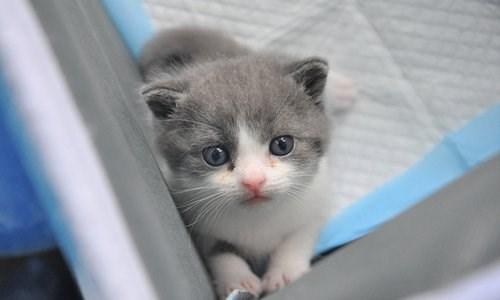 cloning china cats animals
