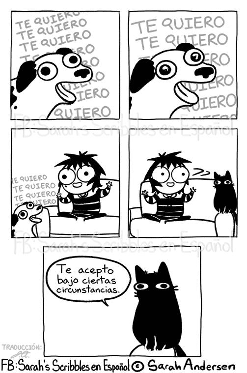 diferencia amor perros y gatos