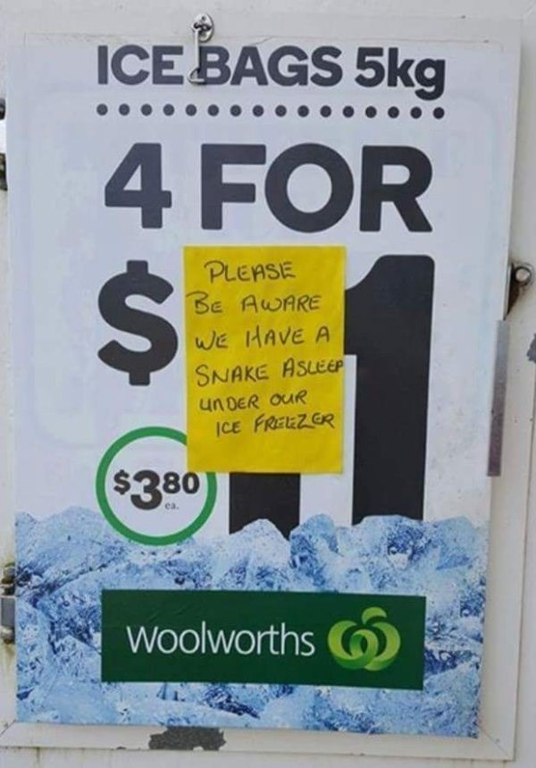 Text - ICE BAGS 5kg 4 FOR PLEASE BE AWARE wWE HAVE A SNAKE ASLEEP un DER OUR CE FREEZ ER $380 ea. Woolworths