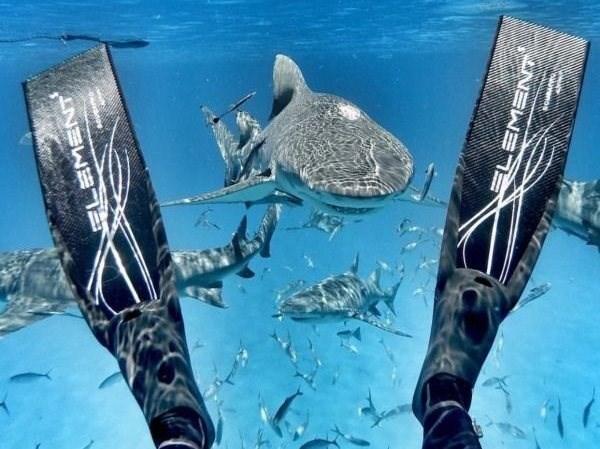 Whale shark - EMENT ovanoe NSWET