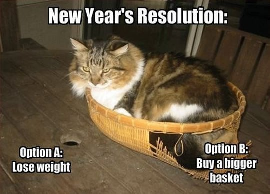 Cat - New Year's Resolution: Option B Buy a bigger basket Option A: Lose weight