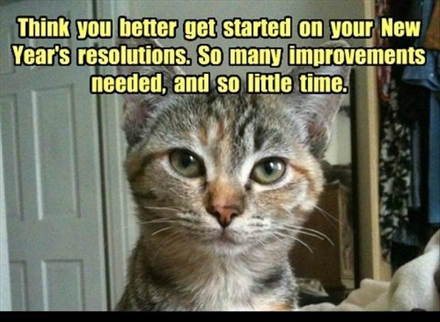 Cat - Think you better get started on your New Year's resolutions. So many improvements needed, and so little time.