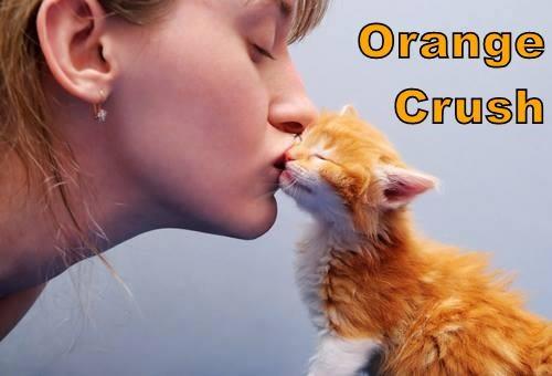 cat meme - Ear - Orange Crush