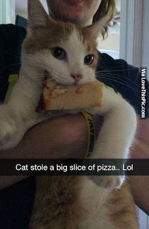 Cat - Cat stole a big slice of pizza.. Lol Via LoveThisPic.com APL