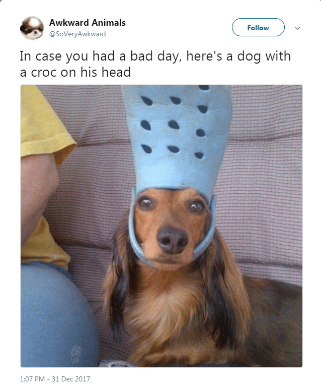 Canidae - Awkward Animals Follow @SoVeryAwkward In case you had a bad day, here's a dog with a croc on his head 1:07 PM - 31 Dec 2017
