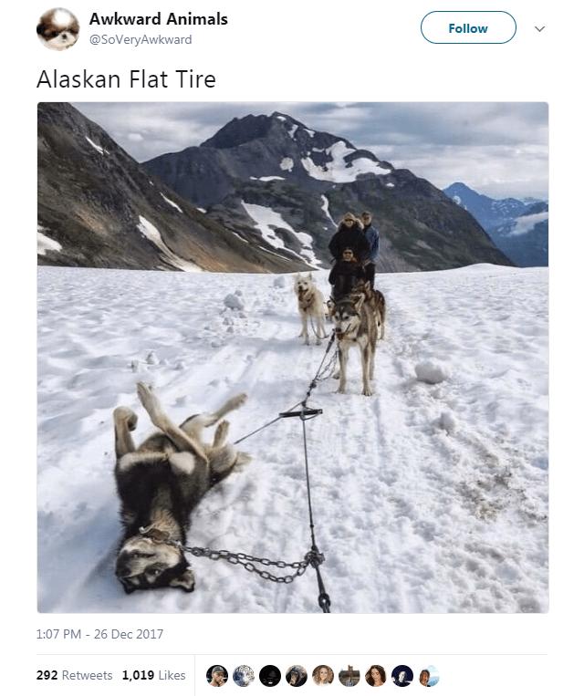 Mountain range - Awkward Animals Follow @SoVeryAwkward Alaskan Flat Tire 1:07 PM - 26 Dec 2017 292 Retweets 1,019 Likes