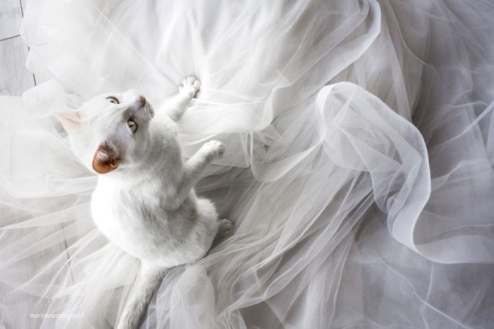 wedding photos with cats - White - marighinmpi