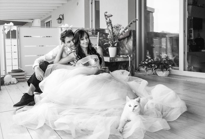 wedding photos with cats - Photograph
