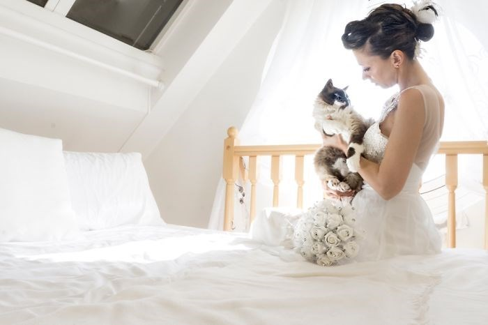 wedding photos with cats - White