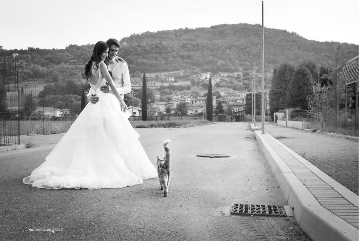 wedding photos with cats - Photograph - marionnazamgierlit