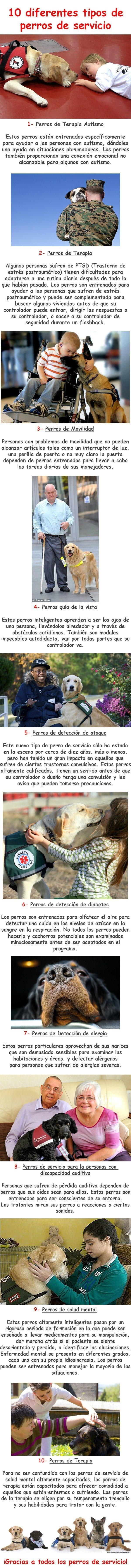 explicacion de los diferentes tipos de perros de servicio