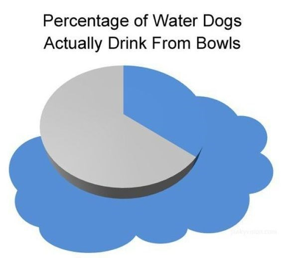 Text - Percentage of Water Dogs Actually Drink From Bowls