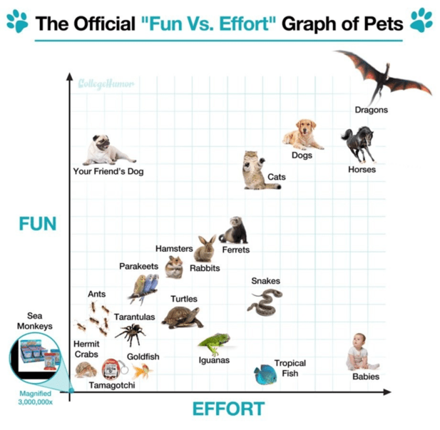 "Text - The Official ""Fun Vs. Effort"" Graph of Pets CollegelHamon Dragons Dogs Your Friend's Dog Horses Cats FUN Hamsters Ferrets Rabbits Parakeets Snakes Ants Turtles Sea Tarantulas Monkeys Hermit Crabs Goldfish Iguanas Tropical Fish Babies Tamagotchi Magnified 3,000,000x EFFORT"