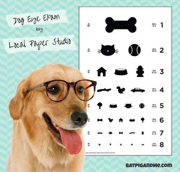 Dog - Day Ene EPam 1 Lcal Paper Studin 2 304 3 4 son 6 7 8 0 BATPIGANDMe.com Ln