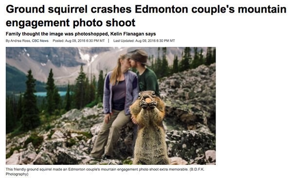 Adaptation - Ground squirrel crashes Edmonton couple's mountain engagement photo shoot Family thought the image was photoshopped, Kelin Flanagan says Last Updatod Aug 09, 2016 6:30 PM MT By Andrea Ross, CBC News Posted: Aug 09, 2016 630 PM MT This friendly ground squirrel made an Edmonton couple's mountain engagement photo shoot extra memorable. (B.D.FK Photography)